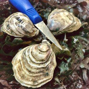 seapa oysters